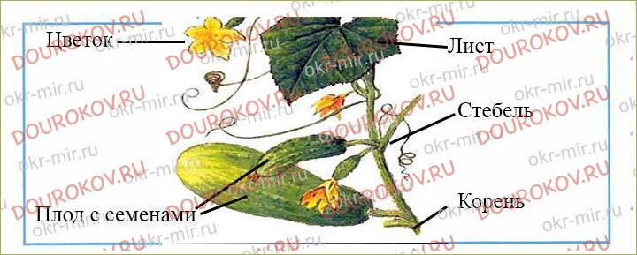 Что общего у разных растений - 16
