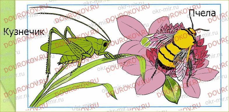Кто такие насекомые - 34