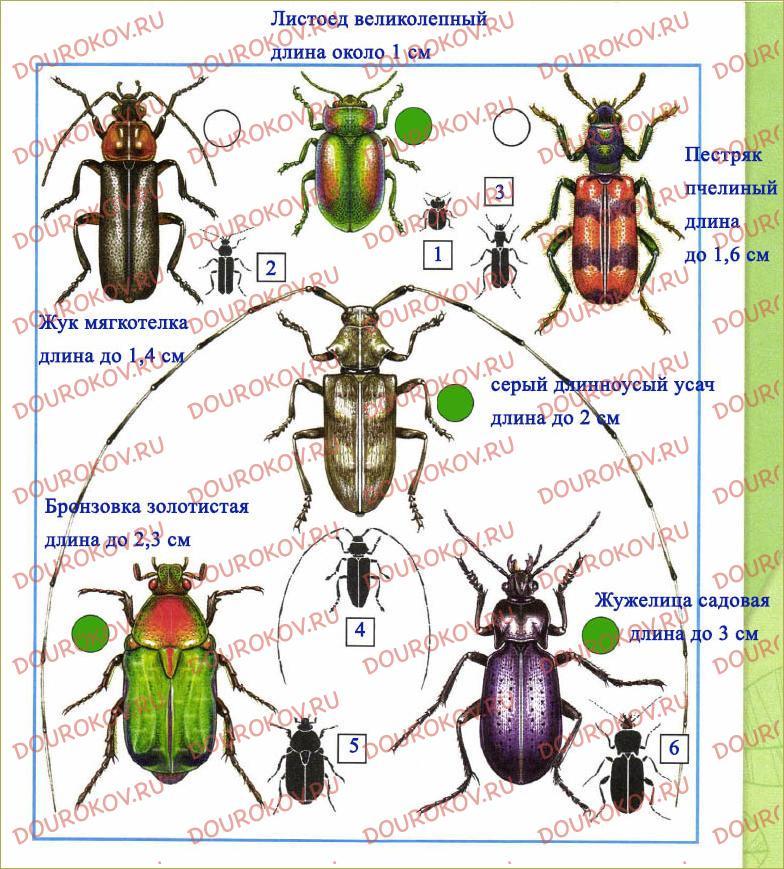 Кто такие насекомые - 35