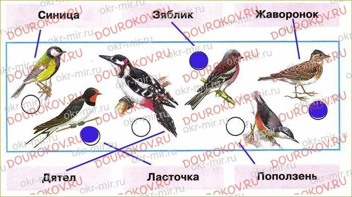 Где зимуют птицы - 22
