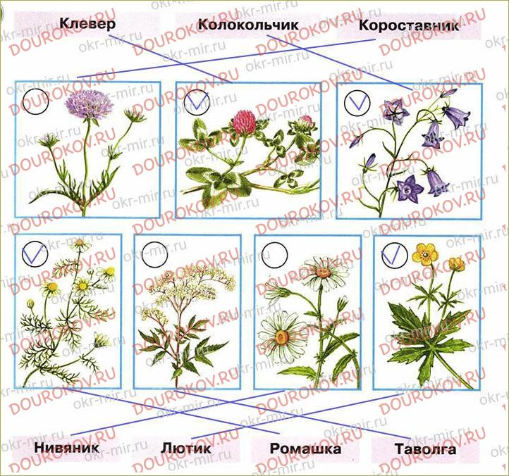 Почему мы не будем рвать цветы и ловить бабочек - 4