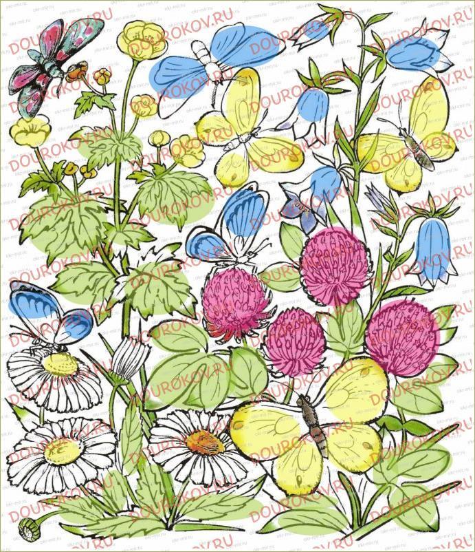 Почему мы не будем рвать цветы и ловить бабочек - 5
