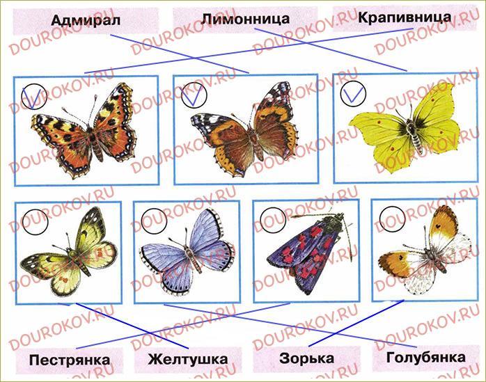 Почему мы не будем рвать цветы и ловить бабочек - 8