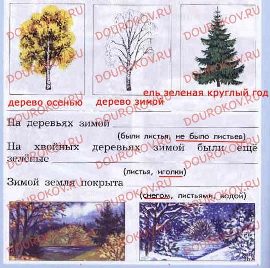 Дневник наблюдений: Зимняя экскурсия - 23