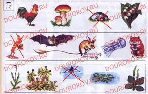 Тема 24. Растения и животные - 20