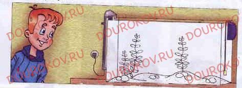 Тема 26. Домашние любимцы и комнатные растения - 25