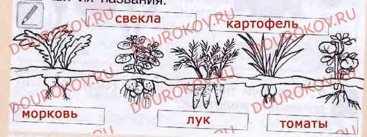 Тема 27. Наши помощники - домашние животные и культурные растения - 30