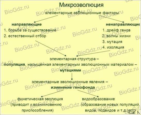 Тема 4.2. Современное эволюционное учение - 3