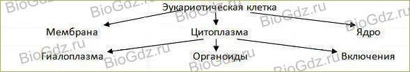 Тема 2.7. Эукариотическая клетка. Цитоплазма. Органоиды - 1