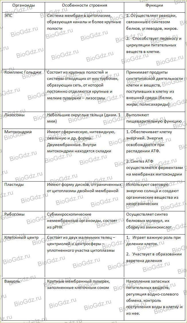 Тема 2.7. Эукариотическая клетка. Цитоплазма. Органоиды - 5