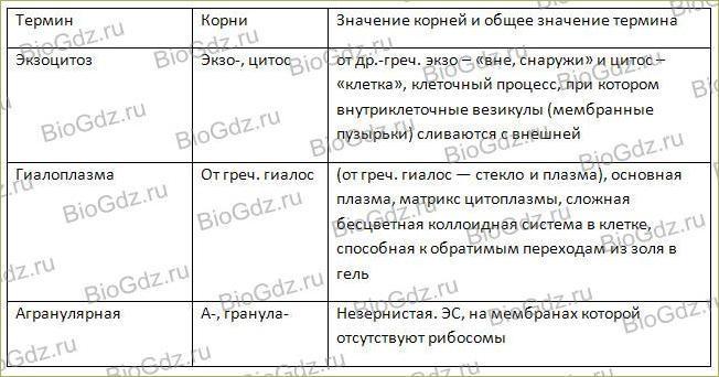 Тема 2.7. Эукариотическая клетка. Цитоплазма. Органоиды - 7