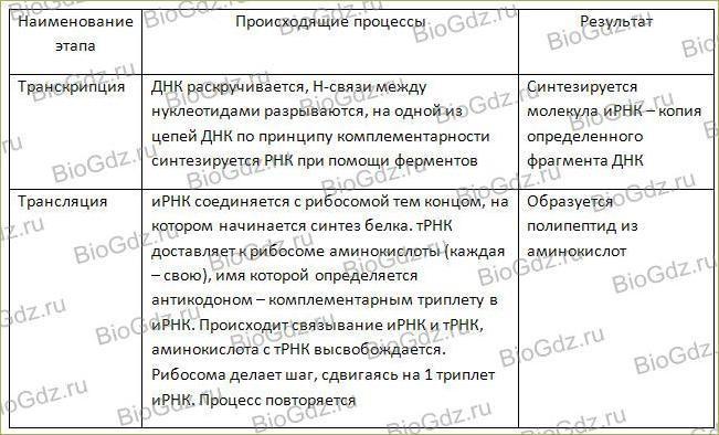 Тема 2.10. Реализация наследственной информации в клетке - 4