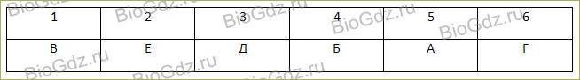 Тема 2.10. Реализация наследственной информации в клетке - 5