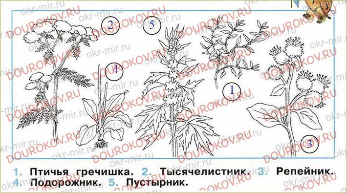Какие бывают растения - 46