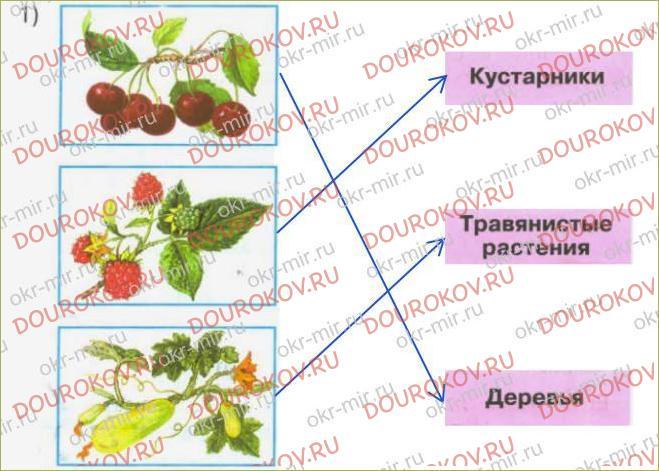 Дикорастущие и культурные растения - 59