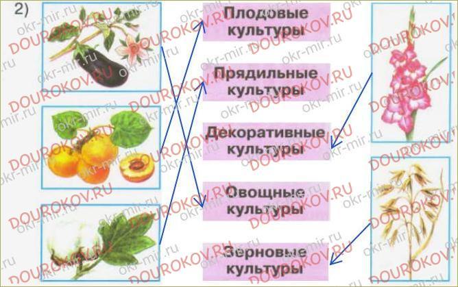 Дикорастущие и культурные растения - 60