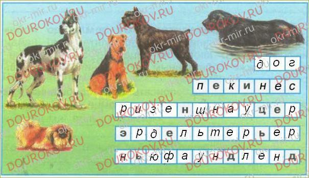 Про кошек и собак - 15