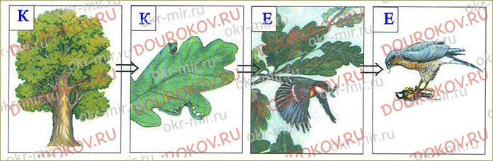 Тема 19. Экологические системы - 37