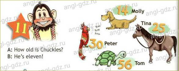 Clever animals (B) - 2