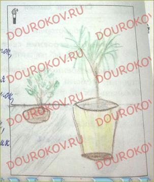 §28. Могут ли растения производить потомство без помощи семя? - 1