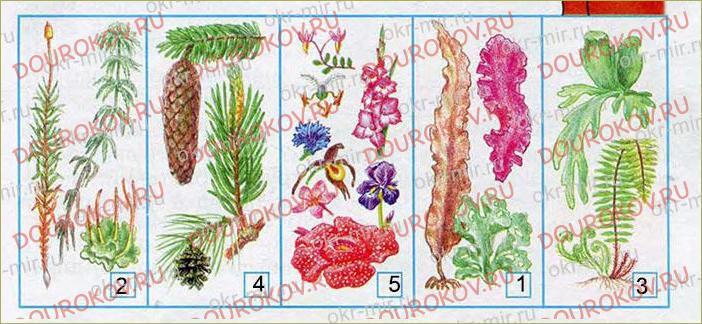 Разнообразие растений - 51
