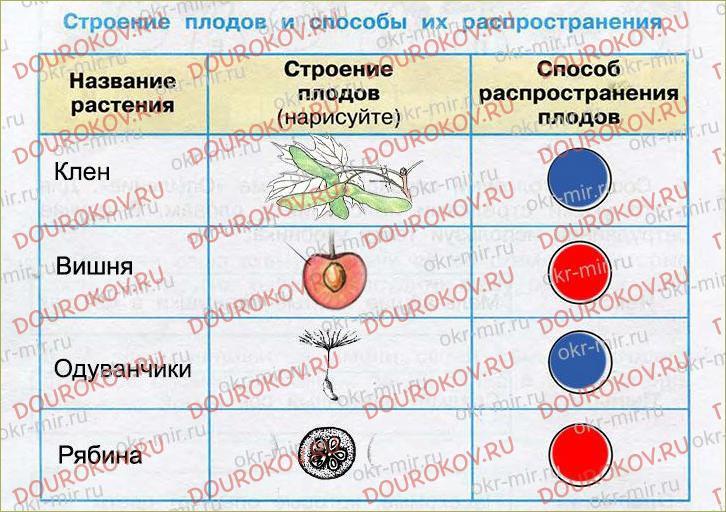 Размножение и развитие растений - 3