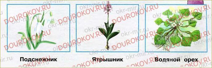 Охрана растений - 5