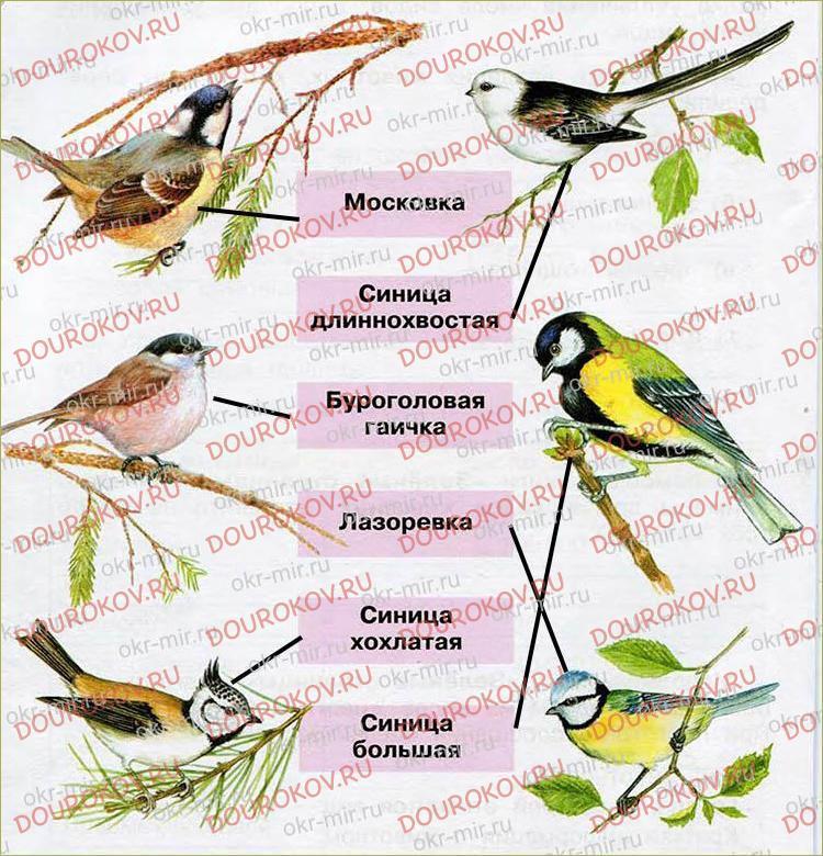 Разнообразие животных - 12