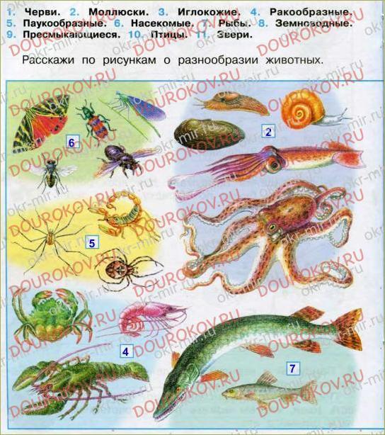 Разнообразие животных - 13
