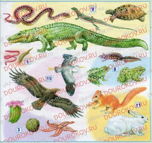 Разнообразие животных - 14