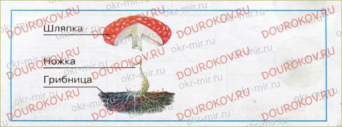 В царстве грибов - 33