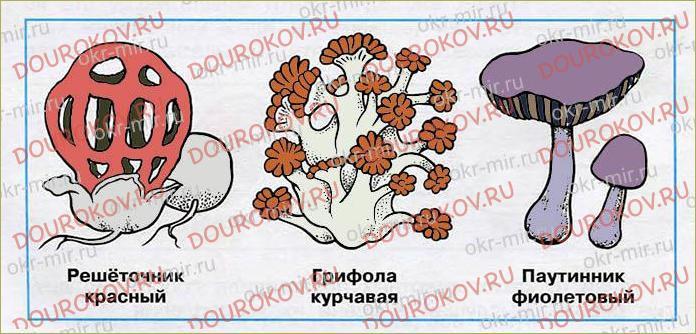 В царстве грибов - 34