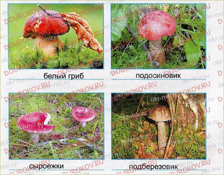 В царстве грибов - 35