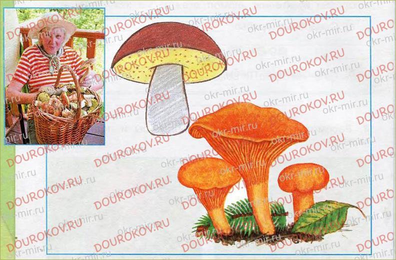 В царстве грибов - 36