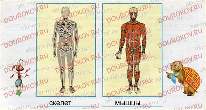 Опора тела и движение - 48