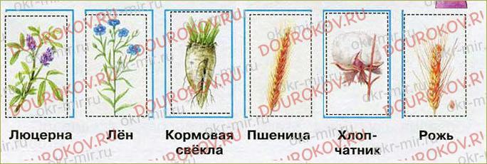 Растениеводство - 37