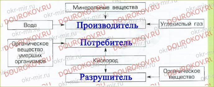 § 7. Живые участники круговорота веществ - 13