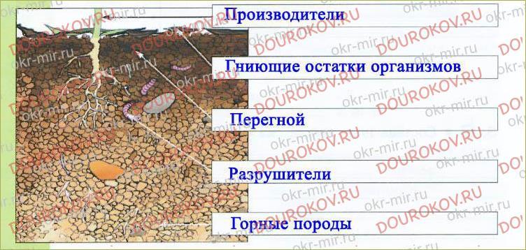 § 11. Почва - важнейшая часть экосистемы - 4