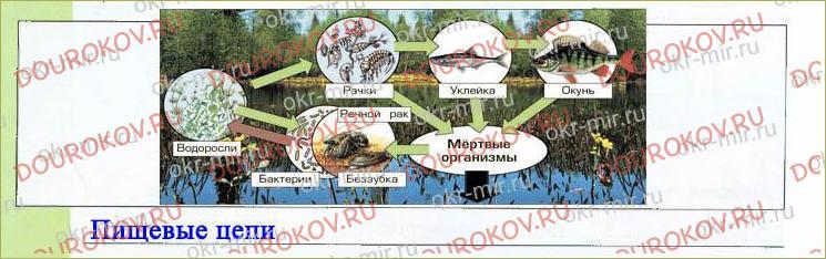 § 12. Экосистема озера - 8