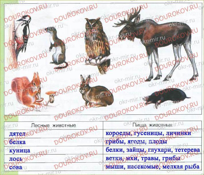 § 16. Потребители и разрушители экосистемы леса - 25