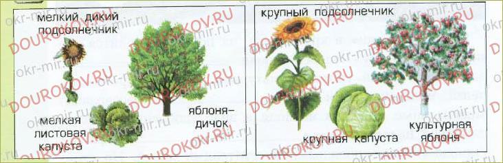 § 17. Экосистема поля - 30