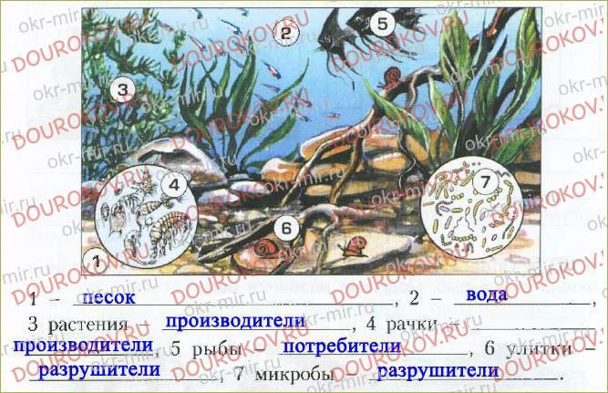 § 18. Аквариум - маленькая искусственная экосистема - 31