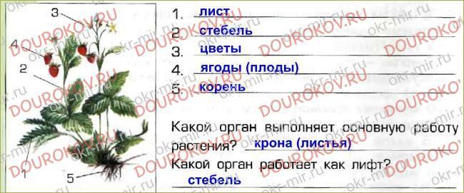 § 19. Растения - производители - 36