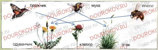 § 19. Растения - производители - 37