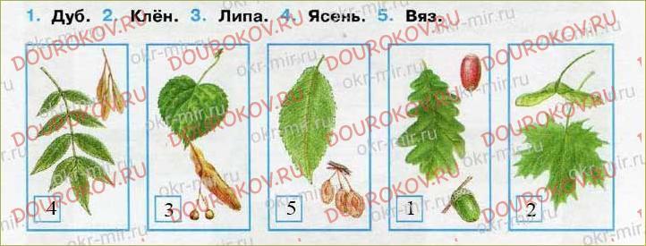 Леса России - 60
