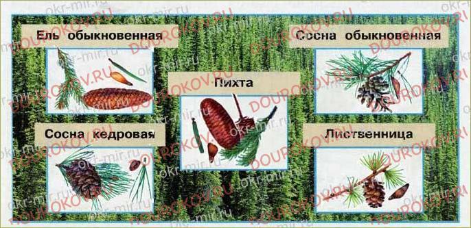 Леса России - 62