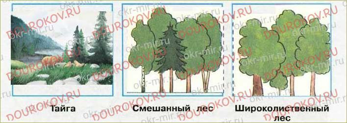 Леса России - 64