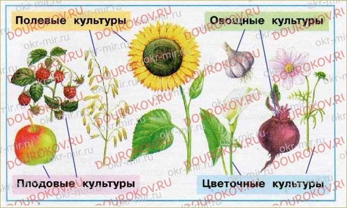 Растениеводство в нашем крае - 64
