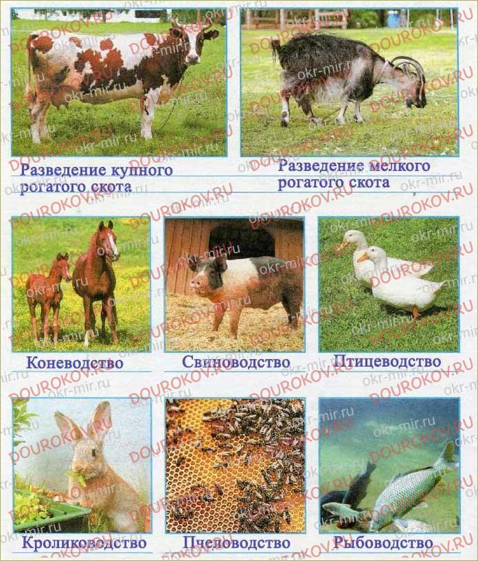 Животноводство в нашем крае - 67