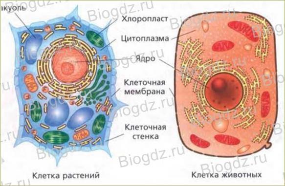 5. Строение клетки. Ткани - 1